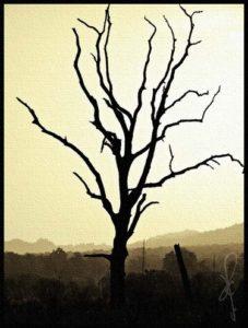 barren-fig-tree_zps438a7102
